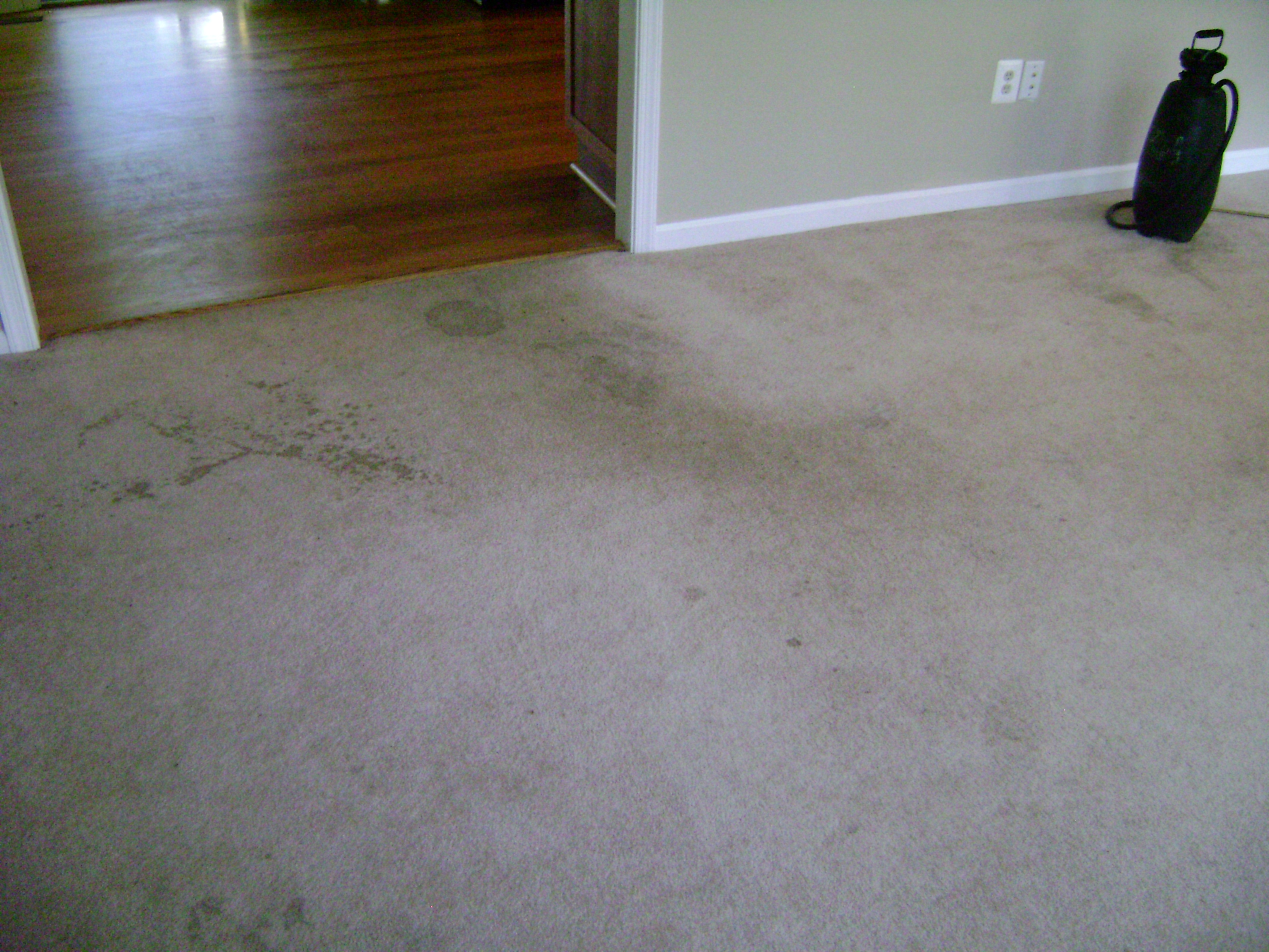 Before A Professional Carpet Cleaning in fairfax va 22033, carpet cleaning shampoo fairfax va, carpet steamcleaning fairfax 22033